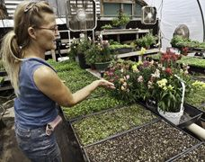 Sharon Bradley (greenhouse manager) tending some of our many varieties of edible flowers