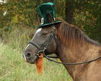 Pony w hat