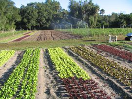 Hammock Hollow Lettuce Fields